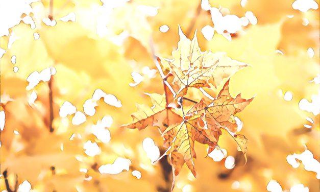 Quiet Space — #89 – Quiet Autumnal Heart