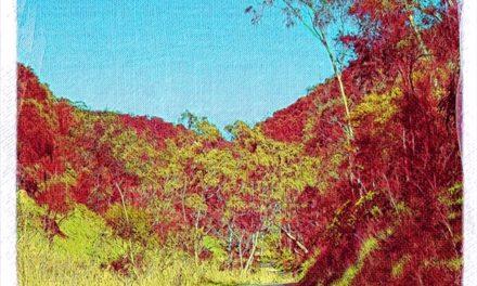 Quiet Space — #121 — Vanishing Path