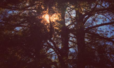 Quiet Space — #125 — The Healing Sounds of zakè