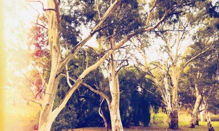 Quiet Space — #176 — Golden Hour